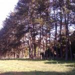 fazenda-catucaba-1
